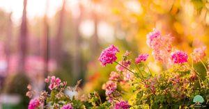 Spring garden flower ideas